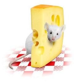 сыр приносит огромную пользу организму